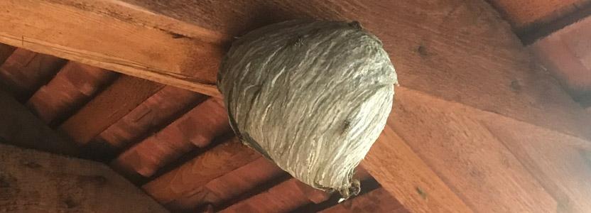 Wespennest entfernen durch Kammerjäger